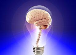 ideas brain in a lightbulb